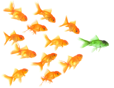 school of fish twitter follows